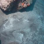 Engelhai