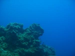 IMG 0839 300x225 <!  :de  >See Ungeheuer auf La Palma entdeckt!<!  :  >