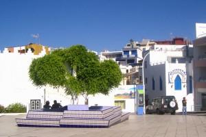 baum aktuell 300x200 <!  :de  >Der bekannte Lorbeerbaum von Puerto Naos schlägt wieder aus!<!  :  >
