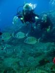 Entdecke die Unterwasserwelt der Kanaren